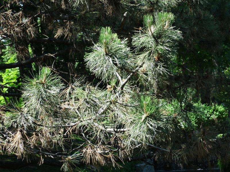 Seed Bearing Plants - Westmount Park